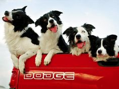 Cute photo showing snapshot of 4 different dog personalities riding in a Dodge