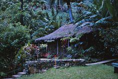 Waioli Grass Shack Manoa 1963    Robert Louis Stevenson's grass hut at the Waioli Tearoom in Manoa Valley. Vintage slide marked 7/17/63.
