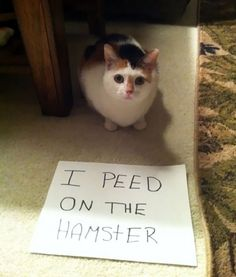 cat shaming photos