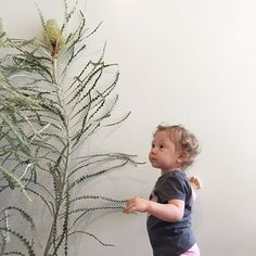 This kid and her flower filled life. Always navigating the tallest of protea