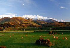 Hapuku Lodge & Tree Houses hotel in New Zealand