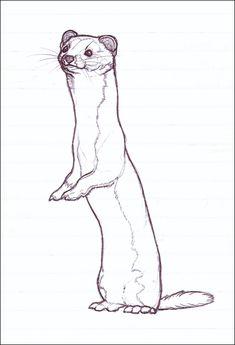 http://avanii.deviantart.com/art/Standing-Weasel-80150767