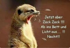 funny picture, but now zack, zack ……. jpg – One of 33184 files … - Birthday quotes Animals And Pets, Cute Animals, Satire, Birthday Quotes, Good Night, Usmc, Funny Pictures, Facebook Humor, German Language