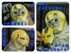 トニャー・スターク!? グレープフルーツでできた猫用アイアンマン・マスク