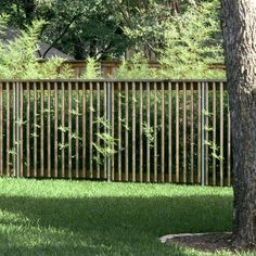 Lakewood Fence and Gate