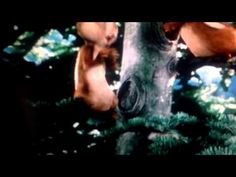 Alvin and the chipmunks part 1 Alvin And The Chipmunks, Horses, Youtube, Animals, Animales, Animaux, Animal, Animais, Horse