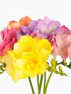 Freesia has an intoxicating scent that would I like to add to my garden. Beautiful Bouquet Of Flowers, Elegant Flowers, Beautiful Roses, Colorful Flowers, Bouquet De Freesia, Freesia Flowers, Flower Table Decorations, Table Flowers, Different Flowers