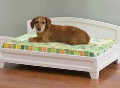 Elevated Dog Bed Wood | Home Design Ideas