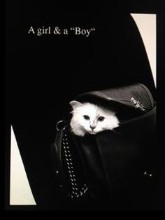 Choupette Lagerfeld Interview - Karl Lagerfeld Quotes on Cat Coupette - Harper's BAZAAR