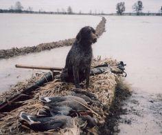 Duck hunt dog.