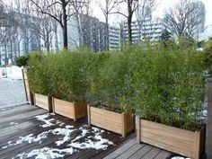 Jardinière de bambous pendant la mauvaise saison, terrasse de l'hôtel Holiday Inn, Bassin de la Villette (Paris 19ème), décembre 2009, photo Alain Delavie