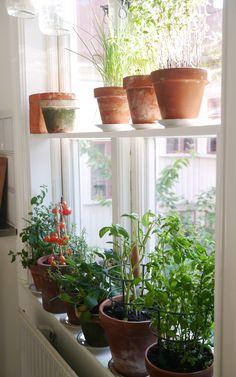 Hylla fönster