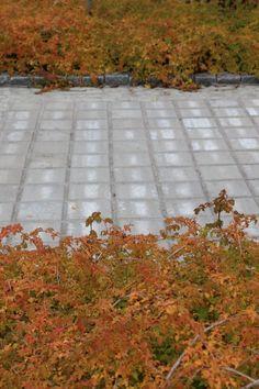 Akvakivi, harmaa, saumattu Grepur-saumausaineella. www.rudus.fi/pihakivet Sidewalk, Walkway, Walkways