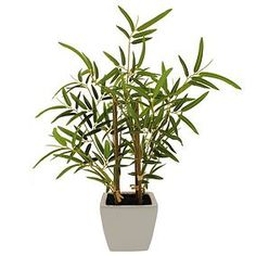Bamboo Plant in White Pot is part of Living Room Plants Bamboo - Beautifully presented in a white ceramic pot, this artificial arrangement features four bamboo steam complete with vibrant green leaves Living Room Plants, House Plants Decor, Artificial Hydrangeas, Artificial Plants, Bamboo Plants, Indoor Plants, Lush Lawn, White Pot, Green Garland