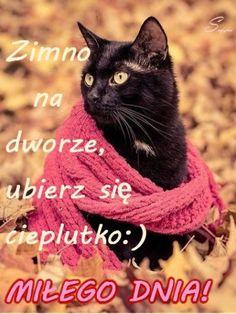 Kartka pod tytułem 🍁Dzień dobry! Zimno dzisiaj... Good Morning, Cute Animals, Children, Blog, Facebook, Text Posts, Picture Polish, Good Day, Boys
