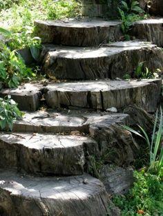 Old tree stump steps