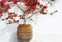 Bougainvillier en pot : les 12 erreurs à ne pas commettre Decoration Plante, Plantation, Planter Pots, Vase, Plants, Gardens, Layering, Flowering Shrubs