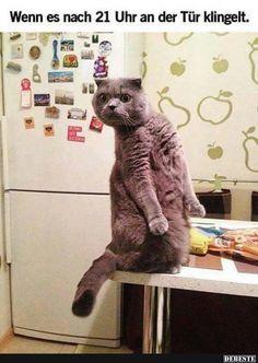 Wenn es nach 21 Uhr an der Tür klingelt.. | Lustige Bilder, Sprüche, Witze, echt lustig