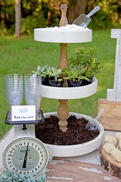 All the best succulent bridal shower ideas! Succulents are the new trend for weddings and celebrations. Find everything about succulent theme for the party Rustic Wedding Showers, Garden Bridal Showers, Wedding Shower Favors, Garden Shower, Shower Plant, Shower Tips, Shower Ideas, Diy Shower, Succulent Wedding Favors