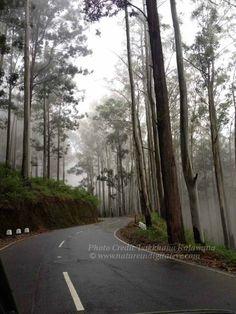 A misty road in Diyatalawa, Sri Lanka  Photo credit: Lakkhana Kalawana