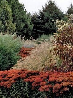 An autumn garden with sedum autumn joy and ornamental grasses Landscape Architecture, Landscape Design, Beautiful Gardens, Beautiful Flowers, Xeriscaping, Colorful Garden, Ornamental Grasses, Autumn Garden, Plant Design