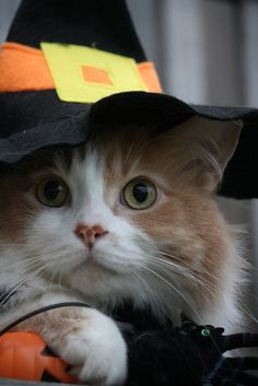 Happy Halloween… by karlaspence35 on Flickr.Via Flickr: Bird watching , Hissy Fit