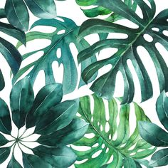 Green Palm Leaves Wallpaper - 25W x 125H