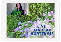 webinar jak ciąć hortensje Aquarium, Gardening, Decorations, Aquarius, Fish Tank, Garten, Lawn And Garden, Horticulture