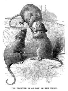 Cartoon Sketches, Animal Sketches, Animal Drawings, Graphic Design Illustration, Illustration Art, Cute Rats, Pet Mice, Hamster, Cat Art