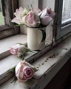 Shabby roses .. so chic  ✨