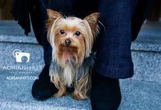 New Dog Commercials | New York City Dog Photographer Adrian Hitt