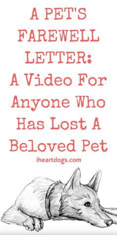 A Pet S Farewell Letter A Video For Anyone Who Has Lost A Beloved Pet Pet Quotes Dog Losing A Pet Quotes Pet Grief