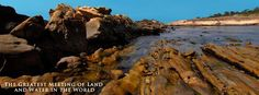 Point Lobos State Natural Reserve,, south of Carmel, CA.  If you love wildlife and the ocean, you MUST go.    A great place for whale-watching!