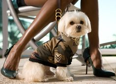 If you're a Dog Lover that loves dressing up your pets in style, then you're going to love what Kane and Couture has to offer. Pet apparel and fashion expe Shark Tank Show, Dog Wedding Dress, Dog Tuxedo, Dog Carrier, Dog Costumes, Dog Hoodie, Dog Sweaters, Dog Birthday, Labradoodle