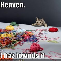 LOL...from the looks of that yarn, he found it an hour ago.