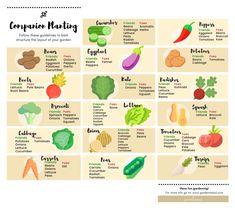 Vegetable Chart, Vegetable Planting Guide, Vegetable Garden Design, Planting Vegetables, Veg Garden, Herb Companion Planting, Garden Planting Layout, Gardens, Vegetable Garden
