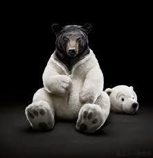 「シロクマ くま 着ぐるみ」の画像検索結果