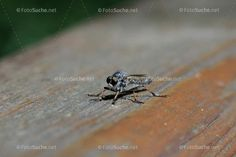 Bremsen Insekten Facettenaugen Animals, Pictures, Insects, Animales, Animaux, Animal, Animais