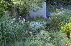 Soft planting scheme of Allium flowers, Verbena bonariensis, Eryngium, bronze fennel and grasses.