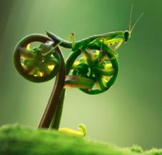 Insect riding a bike into sunset>>>>>This is the incredible snapshot that appears to show an insect riding off into the sunset - on a bicycle.