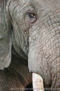 Special moments at Addo's Gorah Elephant Camp - Addo Elephant National Park, South Africa Elephant Camp, Port Elizabeth, Wildlife Conservation, African Safari, Cousins, South Africa, National Parks, Destinations, Southern