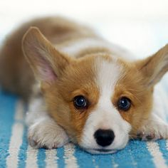 Sweet pup! (: