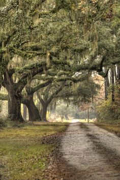 Southern Drive Live Oaks and Spanish Moss by Dustin K  Ryan / South Carolina / Fine Art America