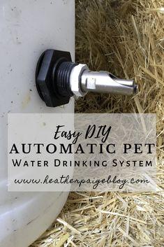 Kune Kune Pigs, Automatic Waterer, Automatic Watering System, Diy Girlande, Pig Pen, Mini Pigs, Pig Farming, Pet Pigs, Hobby Farms