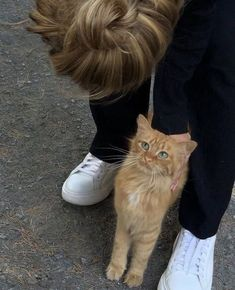 Crazy Cat Lady, Crazy Cats, Cute Little Animals, Baby Animals, Cat Aesthetic, Cute Creatures, Cats And Kittens, Cute Cats, Fur Babies