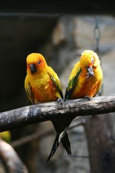 Jerusalem zoo- loving pair