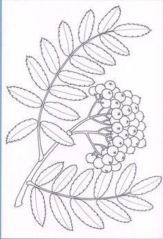 Használja a nyilakat, kapcsoló a lejátszott kép Autumn Crafts, Autumn Art, Fall Coloring Pages, Coloring Books, Floral Illustrations, Botanical Illustration, Embroidery Patterns, Quilt Patterns, Giant Paper Flowers