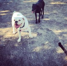 Having a pawsitively good time at Enterprise Dog Park - Clearwater, FL - Angus Off-Leash #dogs #puppies #cutedogs #dogparks #clearwater #florida #angusoffleash