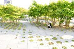 landscape architecture roof garden - Buscar con Google