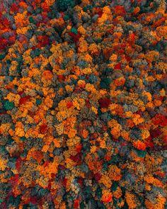 "28.5k aprecieri, 328 comentarii - Huck (@kylefinndempsey) pe Instagram: ""Locally produced Berkshire Halloween candy. Come snag it as a wallpaper on my story. Also, thank…"""